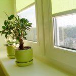 A casa fica melhor com crianças e plantas