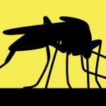Febre Amarela – tudo o que você precisa saber