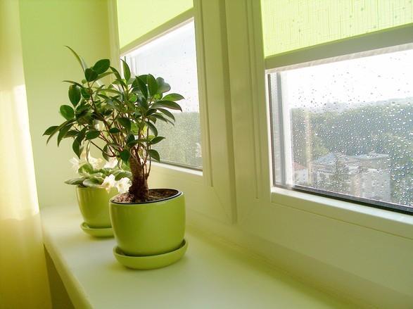 crianças e plantas